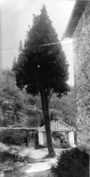 Aiguafreda de Dalt - Xiprer de l'entrada